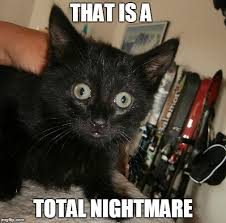 Scared Cat Meme - scared cat meme bird x