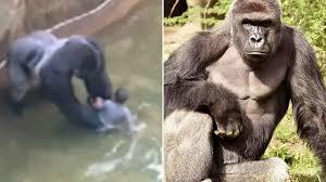 Gorilla Meme - harambe the gorilla know your meme