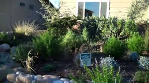 native plant garden california native plant garden youtube