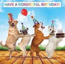 Birthday Dog Meme - birthday cards for dogs best 25 happy birthday dog meme ideas on