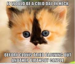 Cat Birthday Memes - lolcats birthday lol at funny cat memes funny cat pictures