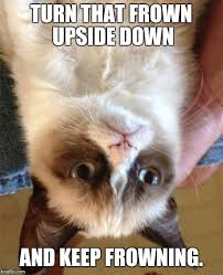 Frown Cat Meme - grumpy cat meme imgflip