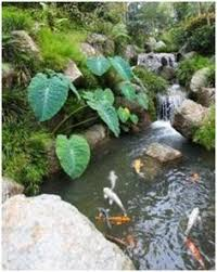 How To Create A Beautiful Backyard You Will Not Believe What You Are Seeing Watch An Unkept Pond Go