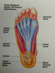Foot Surface Anatomy Foot Notes Is A Blog Commenting On Foot Health Issues Written By