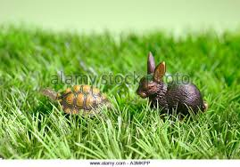 the tortoise and the hare stock photos the tortoise and the hare