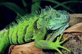 family planning clinic welwyn garden city save the prairie society iguana2 1 sm