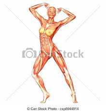 Anatomy Of Women Body Drawing Of Female Body Anatomy Illustration Of The Anatomy Of