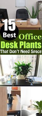 plants for office desk 15 best office desk plants that don t need space balcony garden web