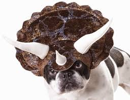 pet halloween costumes uk 13 most hilarious dog halloween costumes ever the modern bark