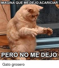 imagenes groseras de gatos imagina que me dejoacariciar pero no me dejo gato grosero meme on