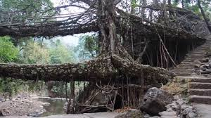 double decker living root bridges at nongriat meghalaya youtube
