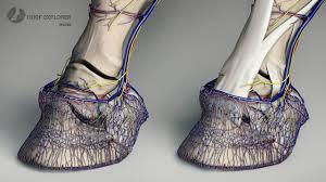 3d Fashion Design Software Hoof Explorer 3d Anatomie Software Für Den Huf Des Pferdes