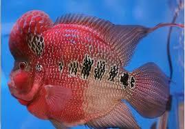 ornamental fish aquarium service provider from palakkad