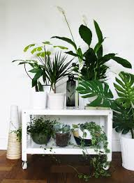 Unexpected Ways To Decorate With Plants Brit Co - Home decoration plants