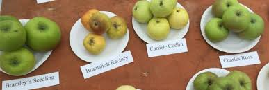 Blackmoor Fruit Trees - apple day and events blackmoor estate