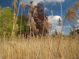 free images tree nature marsh wilderness field prairie