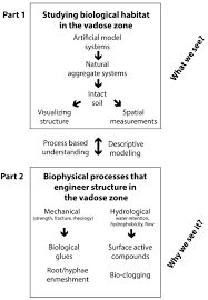 biophysics of the vadose zone from reality to model systems and