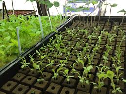 project news sahib aquaponics an urban sustainable food