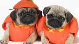 baby carrot halloween costume get your annual dose of cute with these baby and puppies in