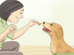4 Ways to Train a Deaf Dog wikiHow