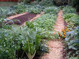 Fall Vegetable Garden Ideas Fall Garden Revue Veggie Gardening Tips