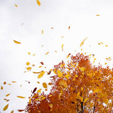 day of fall 2015 is wednesday sept 23 time