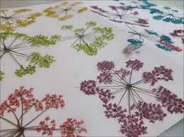 how to color dried flowers they look like some on ebay youtube