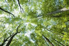 treetops wallpapers high quality free