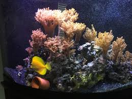 Coral Reef Home Decor 100 Coral Reef Home Decor Whats New Coral Collectors