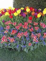 designing with spring bulbs spring bulbs spring flowering bulbs