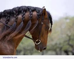 hairstyles for horses 20 mind blowing horse mane hairstyles to show the class