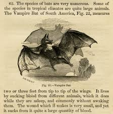 vintage halloween images clip art vampire bat free vintage clip art old design shop blog