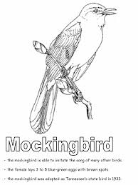 united states symbols coloring pages tennessee state bird mockingbird coloring page teaching units