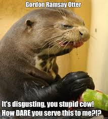 Disgusting Monday Memes - disgusted otter memes quickmeme