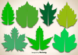 maple leaf free vector art 4838 free downloads