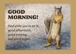 good morning greetings funny squirrel free good morning ecards