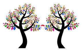 concepts mirror trees dnaexplained genetic genealogy