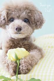 190 best cute dogs images on pinterest animals puppies and baby