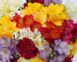100 decorative flowers for home first come flowers