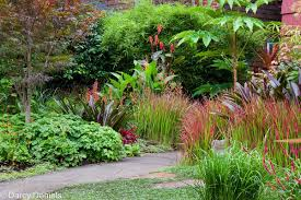 perennial garden with japanese maple u2013 creative landscapes inc