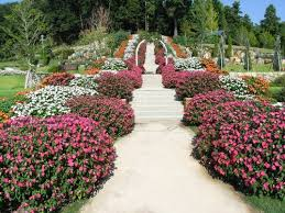 a variety of sunpatiens colors line a path in a japanese garden