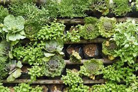 best vertical garden herbs think vertical ideas for the vertical