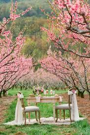 cherry blossom wedding a wedding theme less ordinary cherry blossom wedding theme ideas