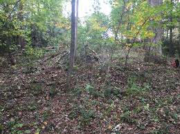 South Carolina vegetaion images Vegetation removal public service activities clemson png