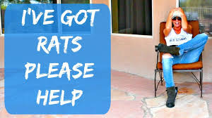 rats i need help i have rats and i can u0027t get rid of them youtube