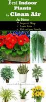 desk plant air purifier decorative desk decoration