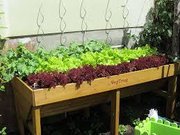 gem se pflanzen balkon gemüse das sich gut verträgt und gemüse das sich nicht gut