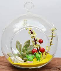 air plant terrarium globe home design ideas