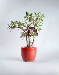 Small Indoor Trees by Small Indoor House Plants Arts