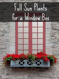 What To Plant In Window Flower Boxes - full sun plants for a window box isavea2z com